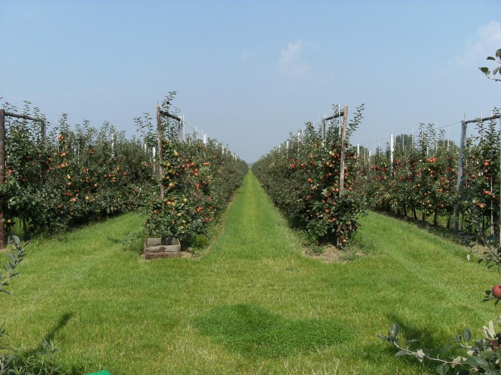 Doorkijkje in de appelboomgaard
