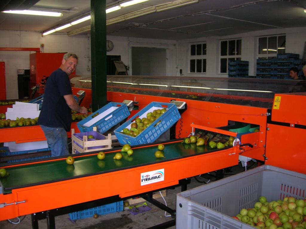 Fruit sorteren