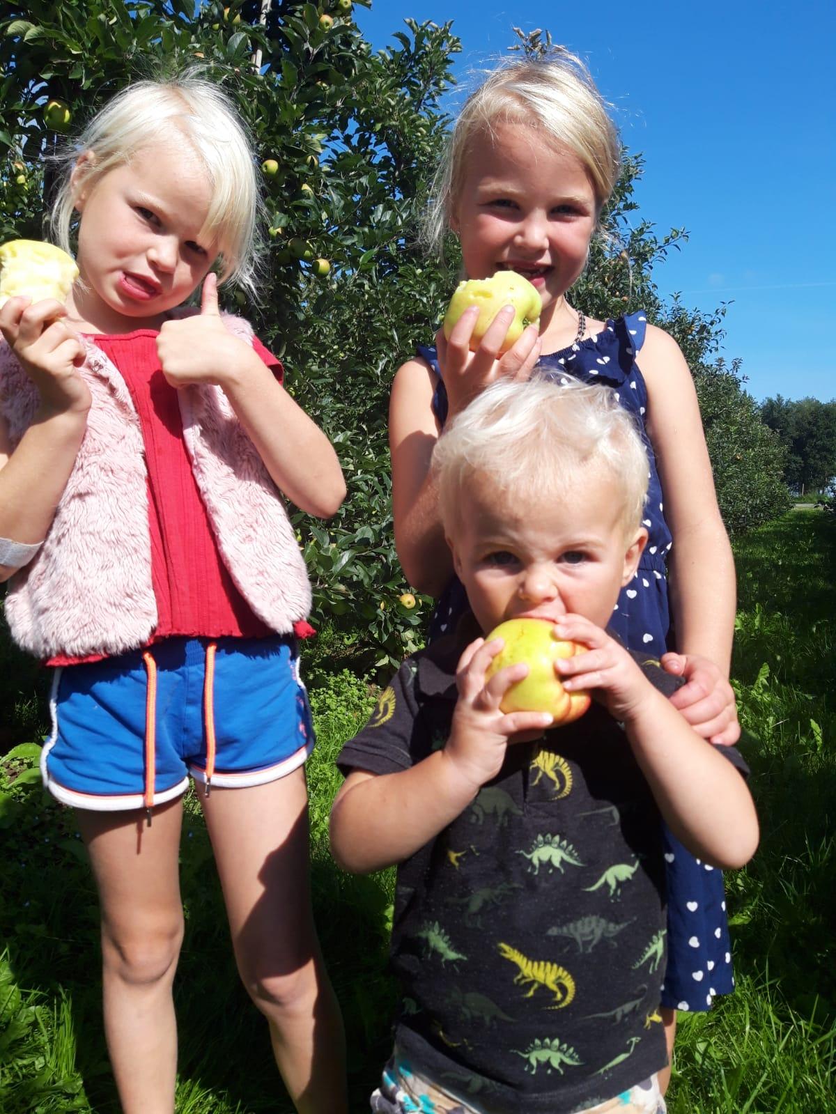 De kleinkinderen met nieuwe oogst Delbare appels!